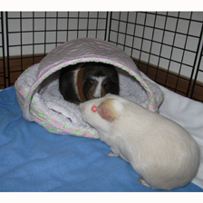 Cavy Canopy & Oval Bed